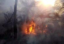 Kebakaran di Gunung Slamet