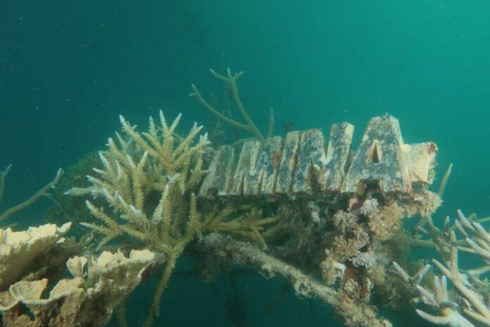 Terumbu karang di Tanjung Gelam Karimunjawa yang dikembangkan Pertamina menggunakan teknologi biorock.