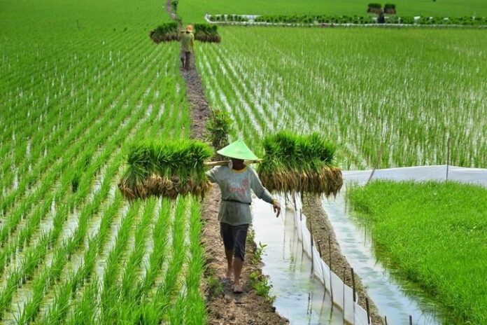 Pertanian