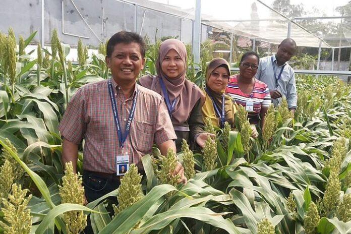 Sorghum training fellows