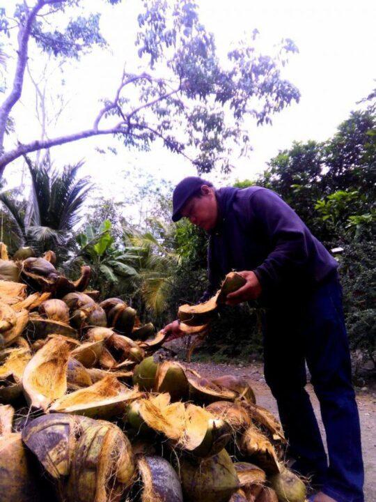 Sabut kelapa dipilah dan dipilih