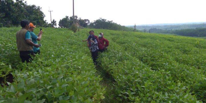 Warga di area lahan kedelai Desa Cibulan