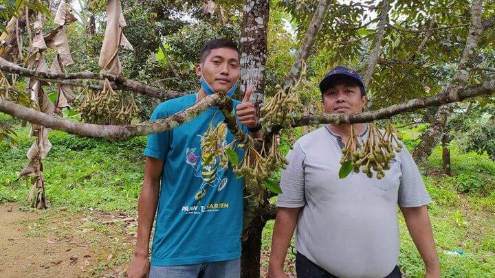 Teguh Waluyo di kebun durian montong bawor