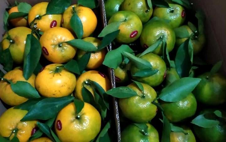 Jeruk hasil kebun Wahyudi