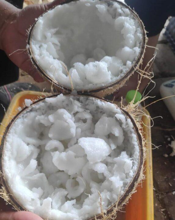 Buah kelapa kopyor