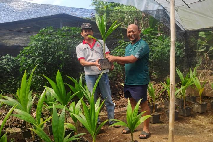 Peminat bibit kelapa kopyor