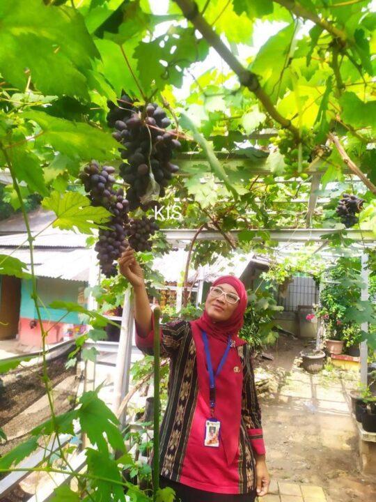 Koleksi tanaman anggur lainnya