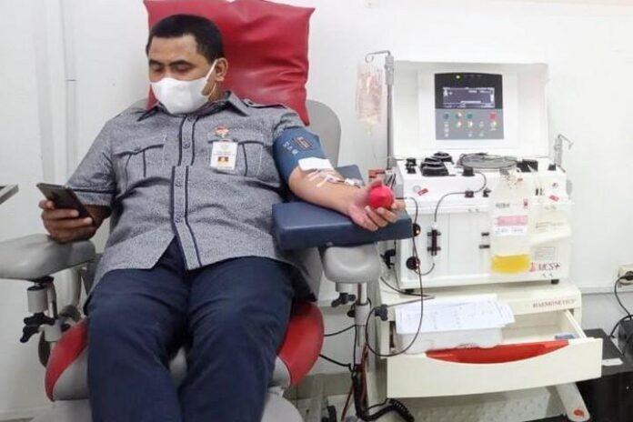 Donor plasma konvalesen